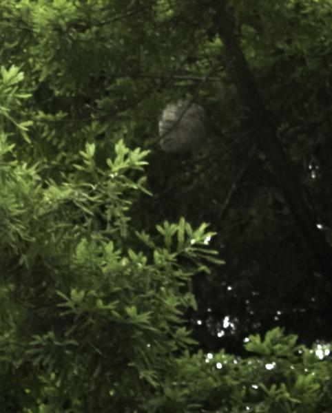 Nest Number 2